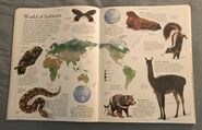 DK Encyclopedia Of Animals (17)