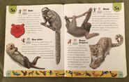 Endangered Animals Dictionary (21)