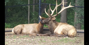 Milwaukee County Zoo Elks