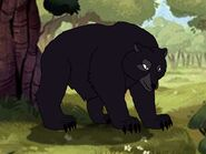 Rileys Adventures American Black Bear