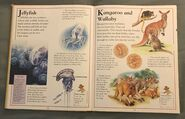The Kingfisher First Animal Encyclopedia (37)