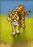 Tiger (Youda Safari)