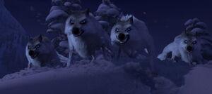 Wolves Frozen