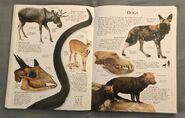 DK Encyclopedia Of Animals (68)