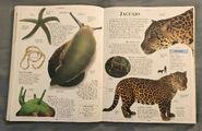 DK Encyclopedia Of Animals (98)