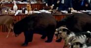 Evan Almighty Bears