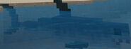 MROTP Great White Shark