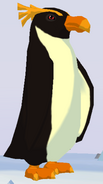 Macaroni Penguin WOZ