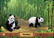 ABC Mouse Pandas