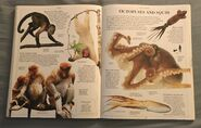 DK Encyclopedia Of Animals (117)