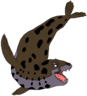 Dotty the Leopard Seal