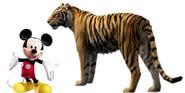 Mickey Bengal