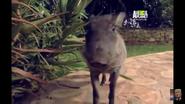 UTAUC Warthog