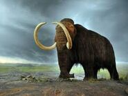 Woolly Mammoth DNA