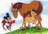 Foal-in-baby-animals-from-disney-discovery-series
