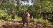 TJB Pygmy Hog