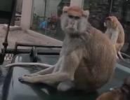 Topeka Zoo Monkey