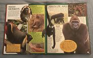Wild Creatures (Eyes On Nature) (10)