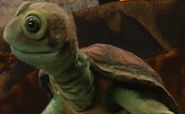 Chauncey the Turtle