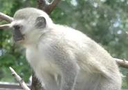 Columbus Zoo Monkey