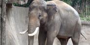 Saint Louis Zoo Elephant
