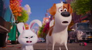 Secret-life-pets-disneyscreencaps.com-8088