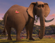 African elephant seeing a heart card on his back