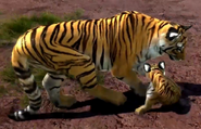 South-china-tiger-zootycoon3