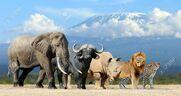 57827799-big-five-africa-lion-elephant-leopard-buffalo-and-rhinoceros