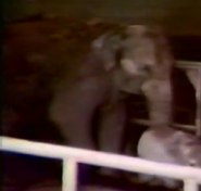 Alaska Zoo Asian Elephant