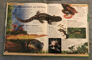 DK First Animal Encyclopedia (49)