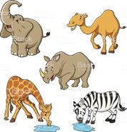 Elephant Camel Giraffe and Rhinoceros vs Bonobo Chimpanzee Orangutan and Gorilla