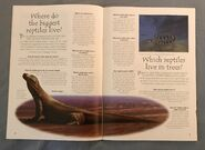 Reptiles (Over 100 Questions and Answers to Things You Want to Know) (2)