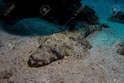 83822262-crocodile-fish-in-the-red-sea-in-egypt