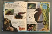 DK First Animal Encyclopedia (73)