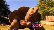 Dickerson Park Zoo Tortoise