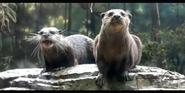 Memphis Zoo Otters