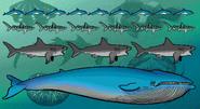 Science blaster jr marine animals