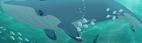 Whale TLG