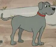 Dingo pictures dalmatians grey dog