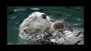 Minnesota Zoo Sea Otter
