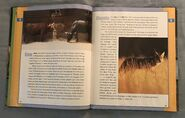 Scholastic Encyclopedia Of Animals (12)