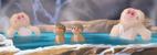 Snow Monkey TLG