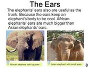 The Elephant's Ears