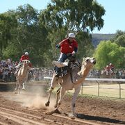 Badaran Camelracing