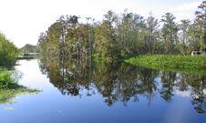 Krentoriswamps