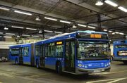Victoria bus
