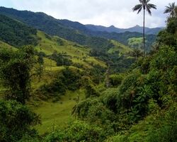 Valle-del-Cocora-Colombia-Andes-Mountains