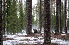 Valdor Forest
