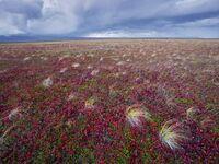 Tundra-landscape-russia 25317 990x742-1